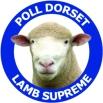 Poll Dorset