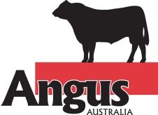 Angus Australia Logo - colour